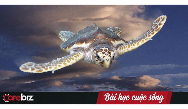 Chuyện rùa học bay: Đọc, ngẫm và ai cũng sẽ rút ra được bài học thành công cho chính mình