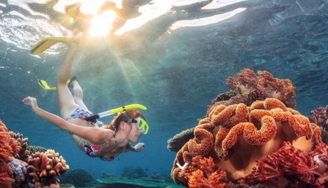Ngắm thế giới đại dương thu nhỏ tại những vùng biển lặn đẹp nhất trên thế giới: Có một điểm đến cực gần Việt Nam