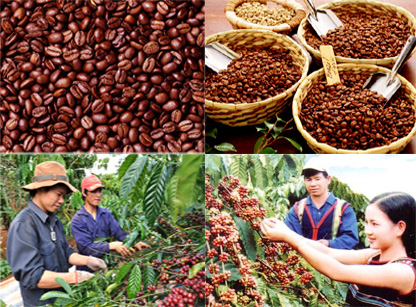 Vinacafe tham gia hỗ trợ phát triển cà phê Buôn Ma Thuột